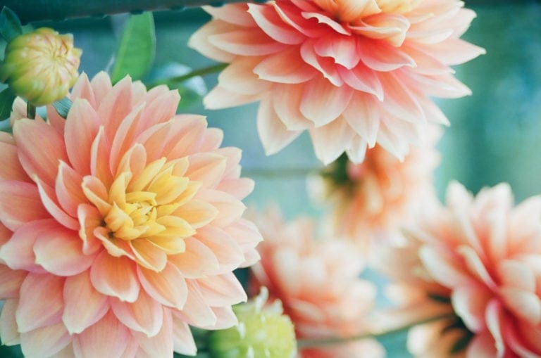 Love Quotes from The Flower of Heaven